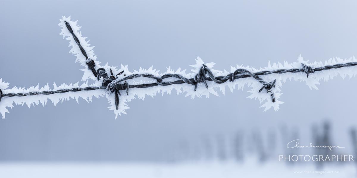 charlemagne-art-winter-2846