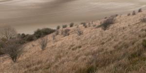 Landscape Color-2759