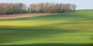 Landscape Color-6489