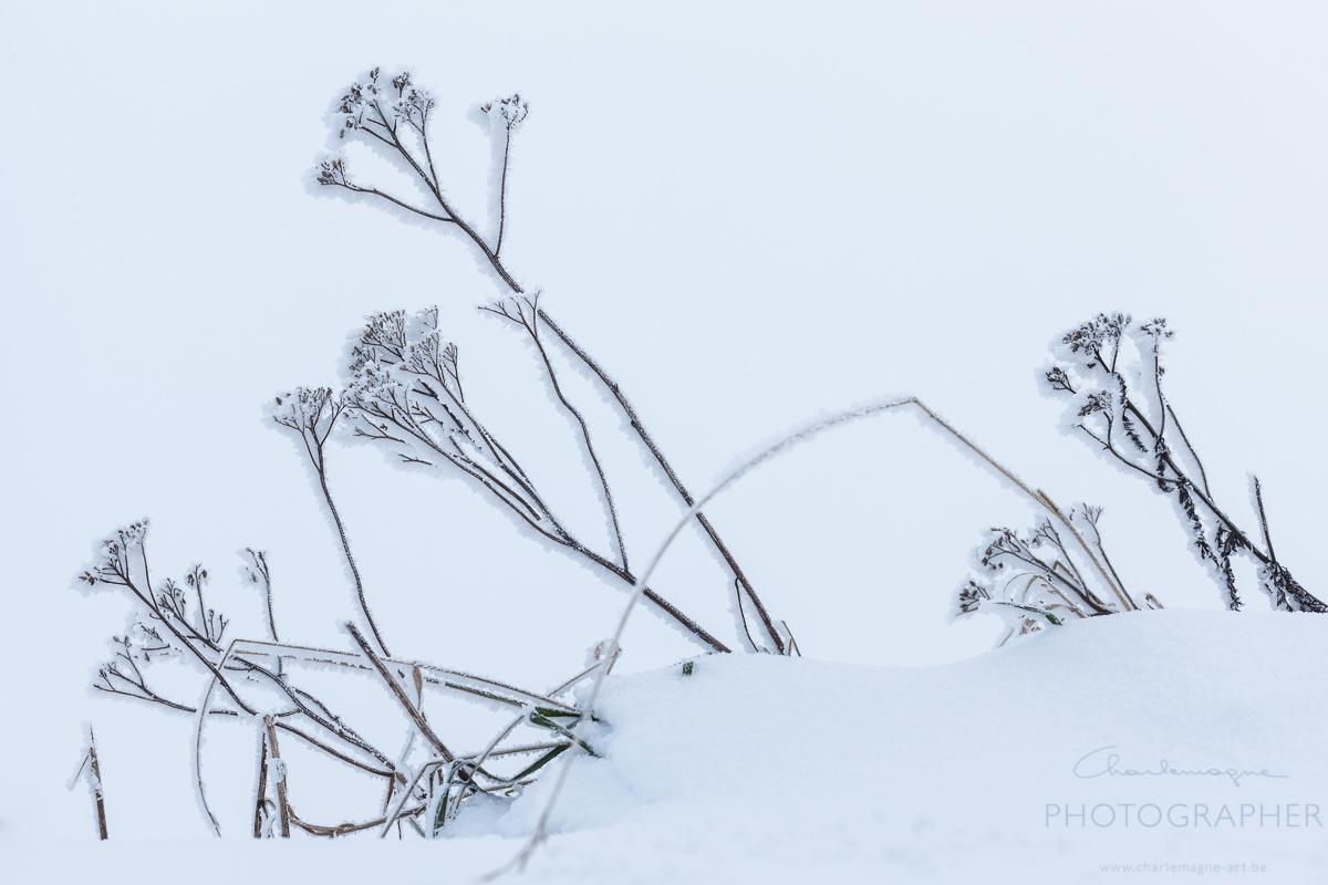 charlemagne-art-winter-2841