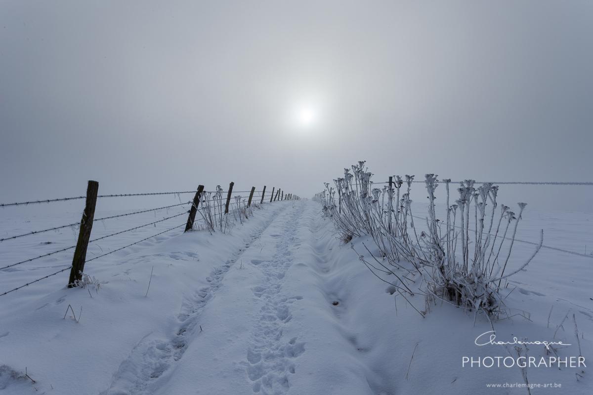 charlemagne-art-winter-2935