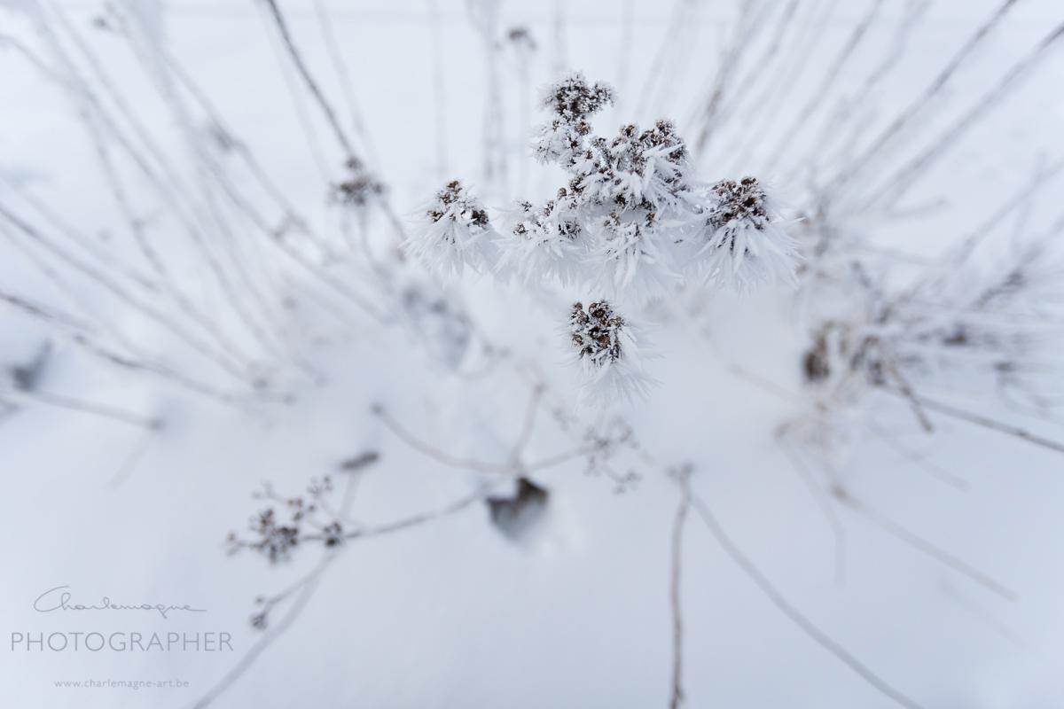 charlemagne-art-winter-2940