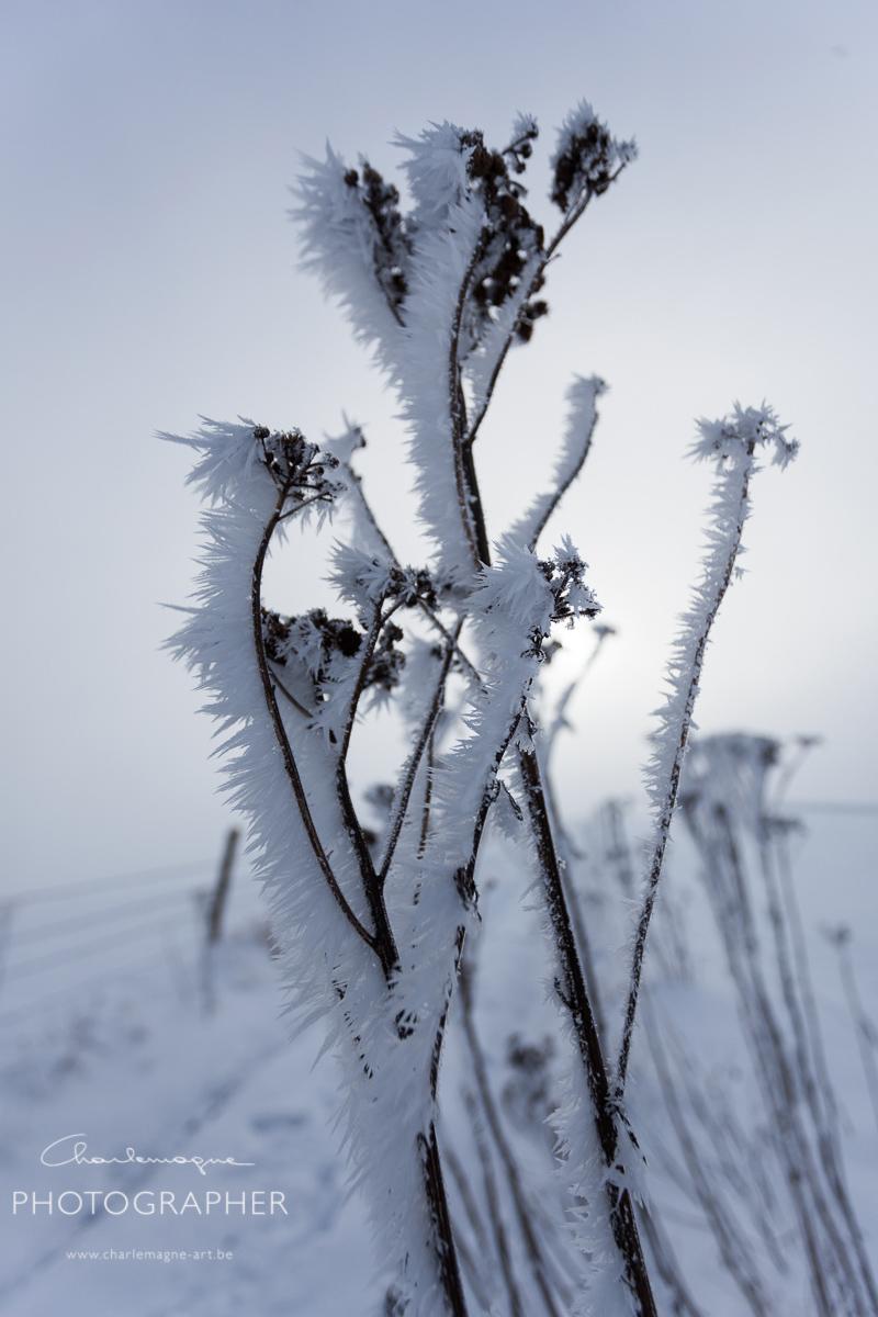 charlemagne-art-winter-2943