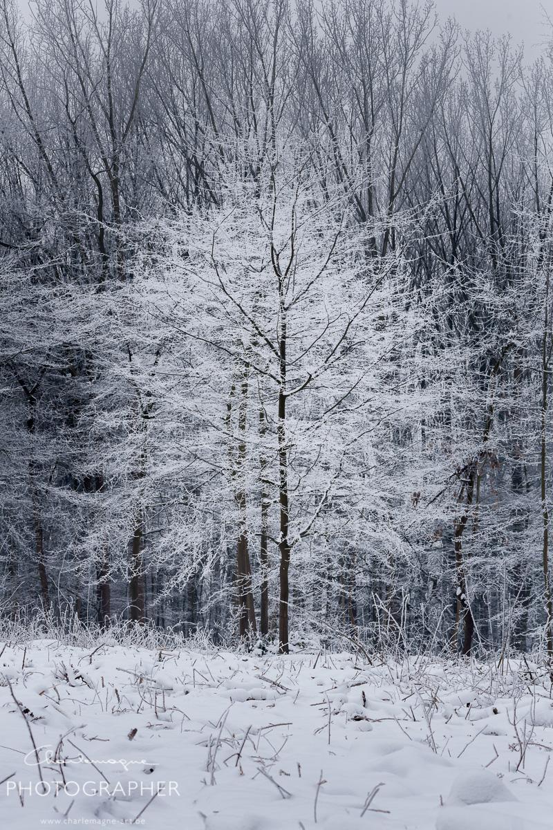 charlemagne-art-winter-2970