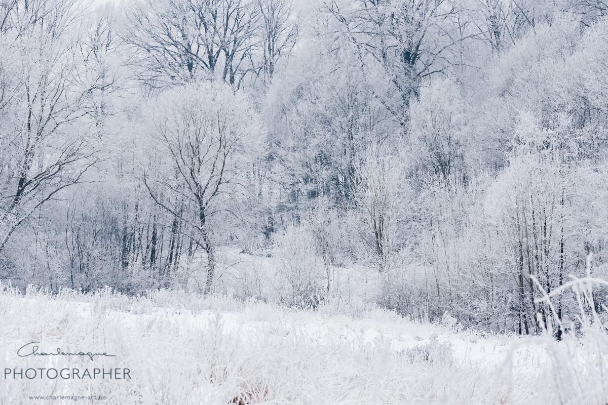 charlemagne-art-winter-2974