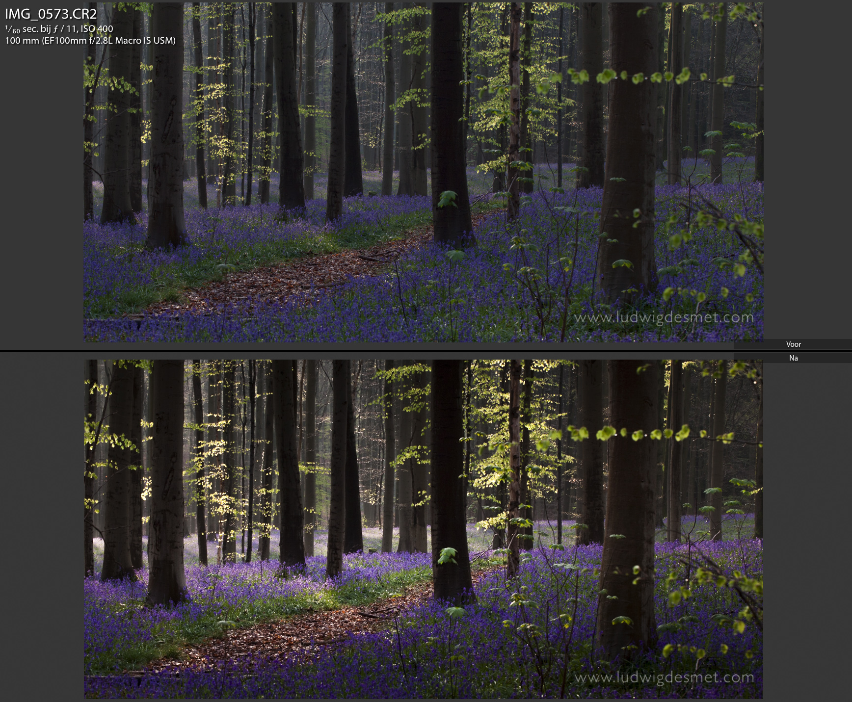 Hallerbos before and after