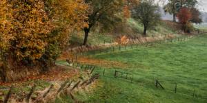 Landscape Color-
