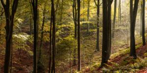 Landscape Color-2488