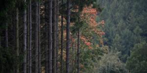 Landscape Color-2822
