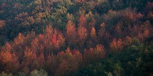 Landscape Color-3296